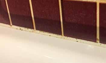 eine wohnung hat bereits schimmel wie er vermieden werden kann kronenwiese. Black Bedroom Furniture Sets. Home Design Ideas